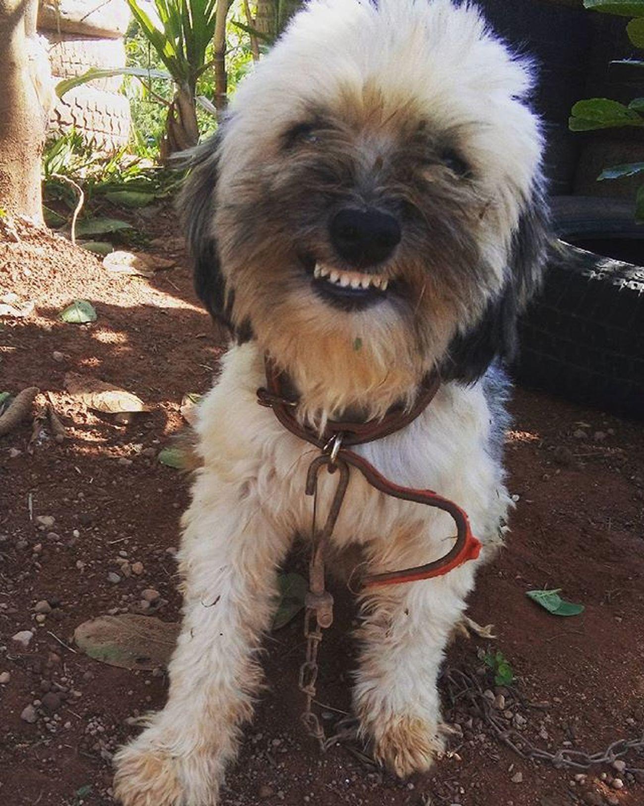 Instadog Mydog Ele voltou, olha o sorriso dele Intalove💓💗💋💞💕 Tommy.