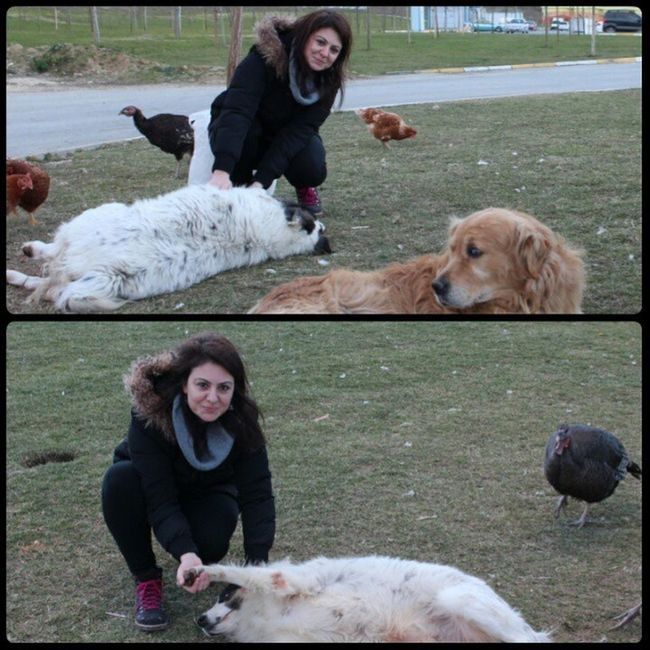 Hayvanlarla yaşamak kadar güzel ne var ki.... Editsiz Köpek Köpüş Hayvanlar dog animal