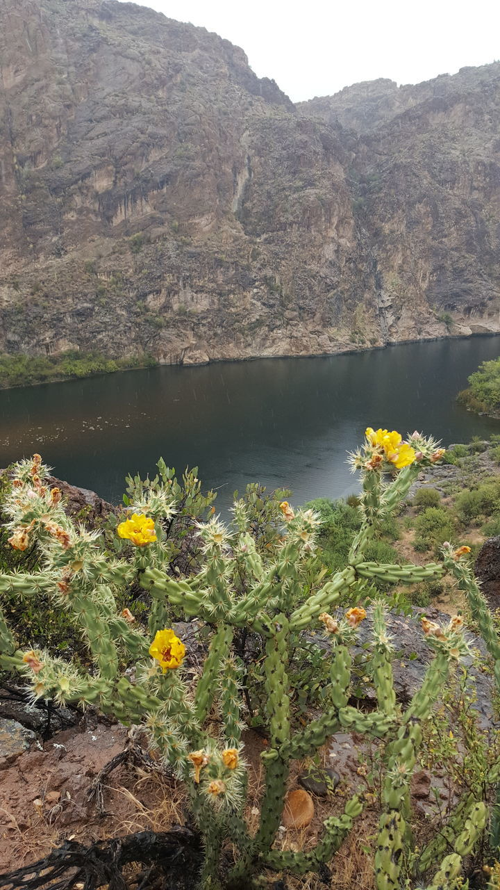 flower, nature, beauty in nature, mountain, day, no people, plant, outdoors, rock - object, tranquility, growth, yellow, lake, scenics, water, uncultivated, tranquil scene, physical geography, freshness, landscape, flower head, fragility, close-up