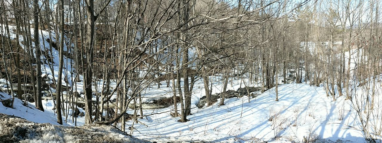 snow, cold temperature, winter, white color, nature, tree, forest, bare tree, tranquil scene, non-urban scene, scenics, frozen, snowing, ice, landscape, no people, beauty in nature, panoramic, mountain, polar climate, tranquility, wilderness, blue, sky, outdoors, day, rural scene, branch, freshness, ice hockey