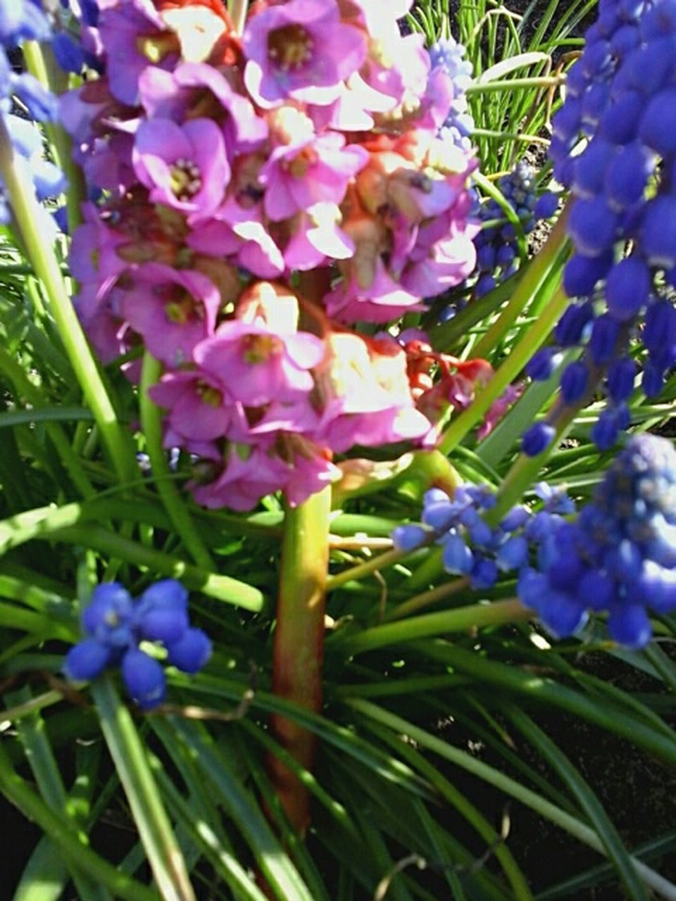 growth, purple, flower, nature, beauty in nature, plant, freshness, day, no people, fragility, close-up, outdoors
