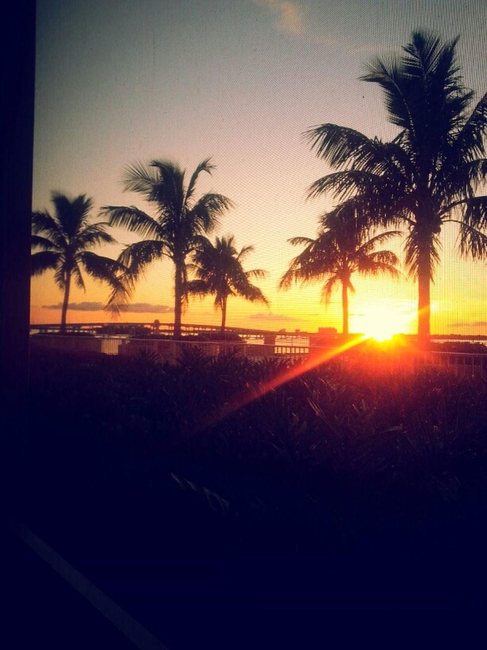 Sunset Palm Trees Florida