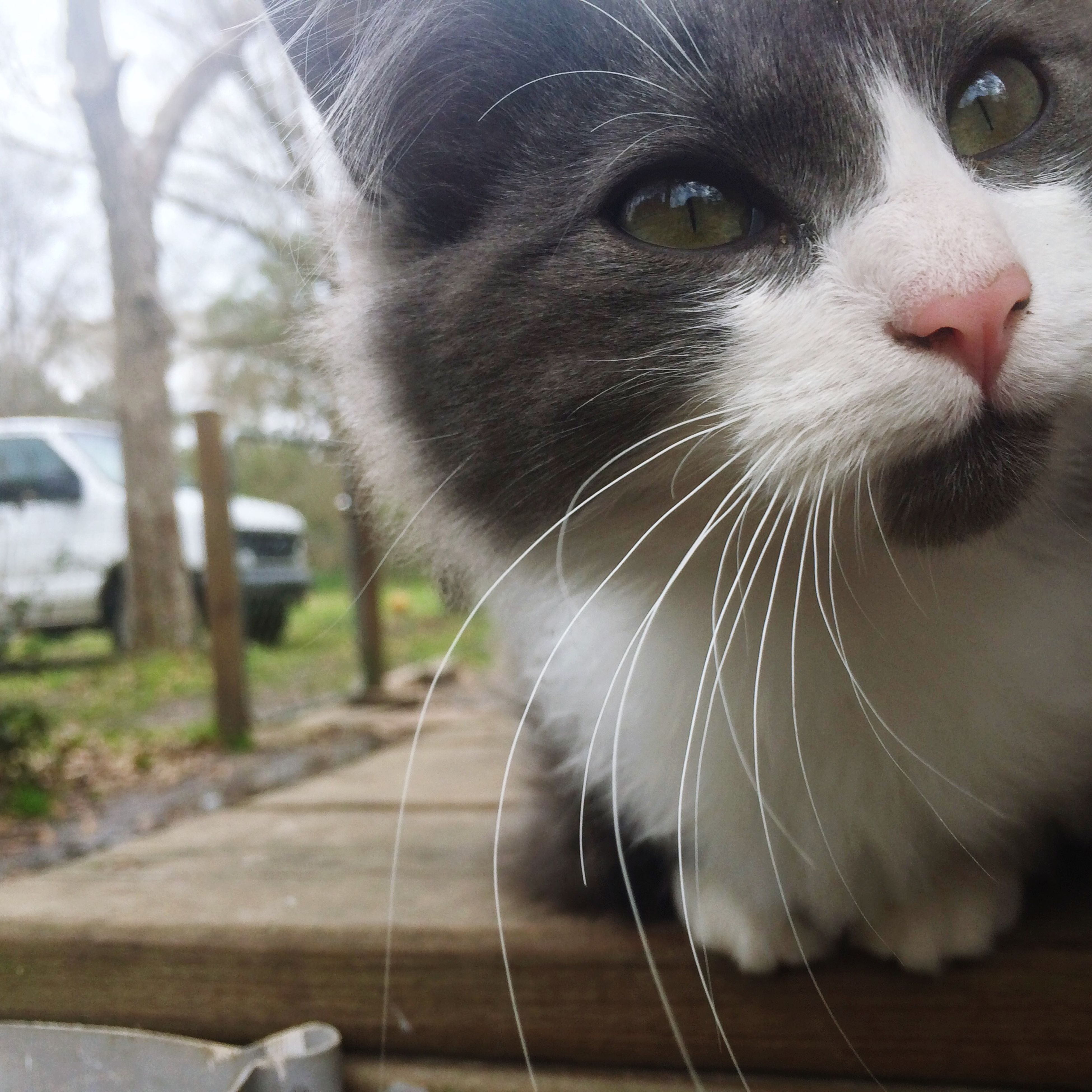one animal, animal themes, pets, domestic animals, mammal, close-up, domestic cat, focus on foreground, whisker, animal head, feline, looking away, cat, indoors, no people, alertness, animal body part, day