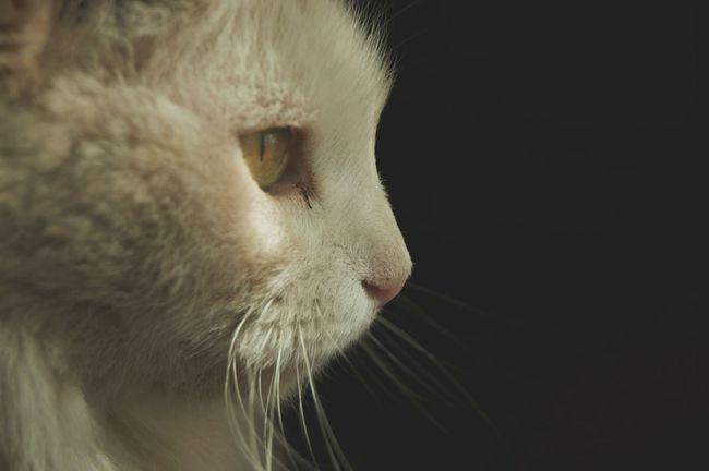 Kitty Cat Cats Of EyeEm Amateur Shot Amateur Photographer Amateur Photography Animal Portrait Animal Photography Amateurish
