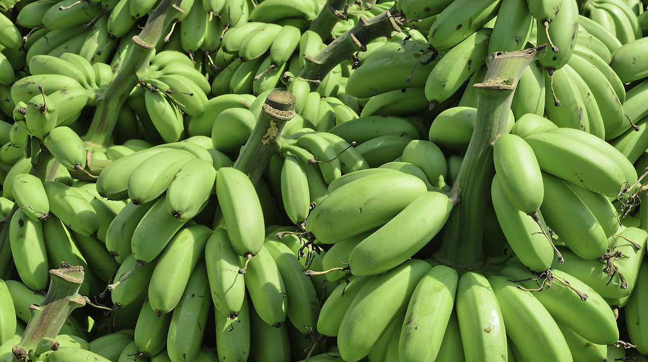 green color, food and drink, banana, food, vegetable, healthy eating, abundance, bunch, day, no people, banana tree, freshness, fruit, tree, outdoors, nature