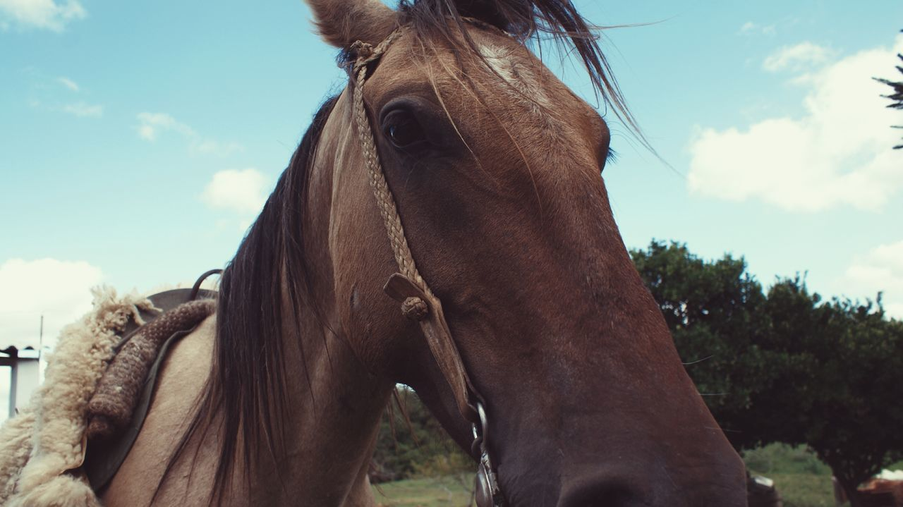 Animal Body Part Animal Themes Bridle Close-up Day Domestic Animals Environment Herbivorous Horse Livestock Low Angle View Mammal Nature No People Outdoors Sky Working Animal