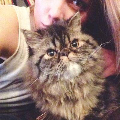 Kitty selfies Oliverthecat ?