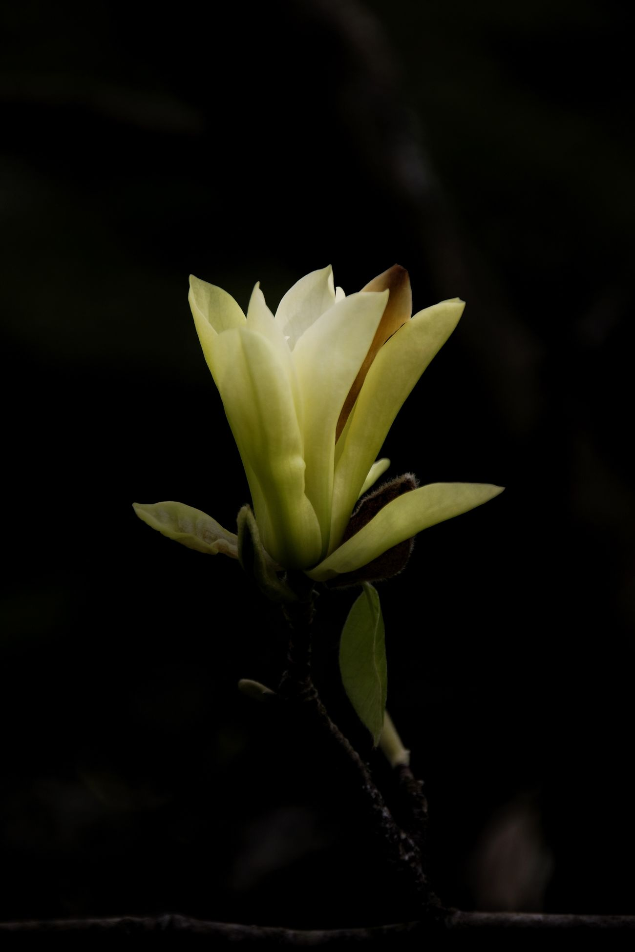 Yellow magnolia EyeEm Best Shots Eye4photography  EyeEm Nature Lover We Are Photography, We Are EyeEm