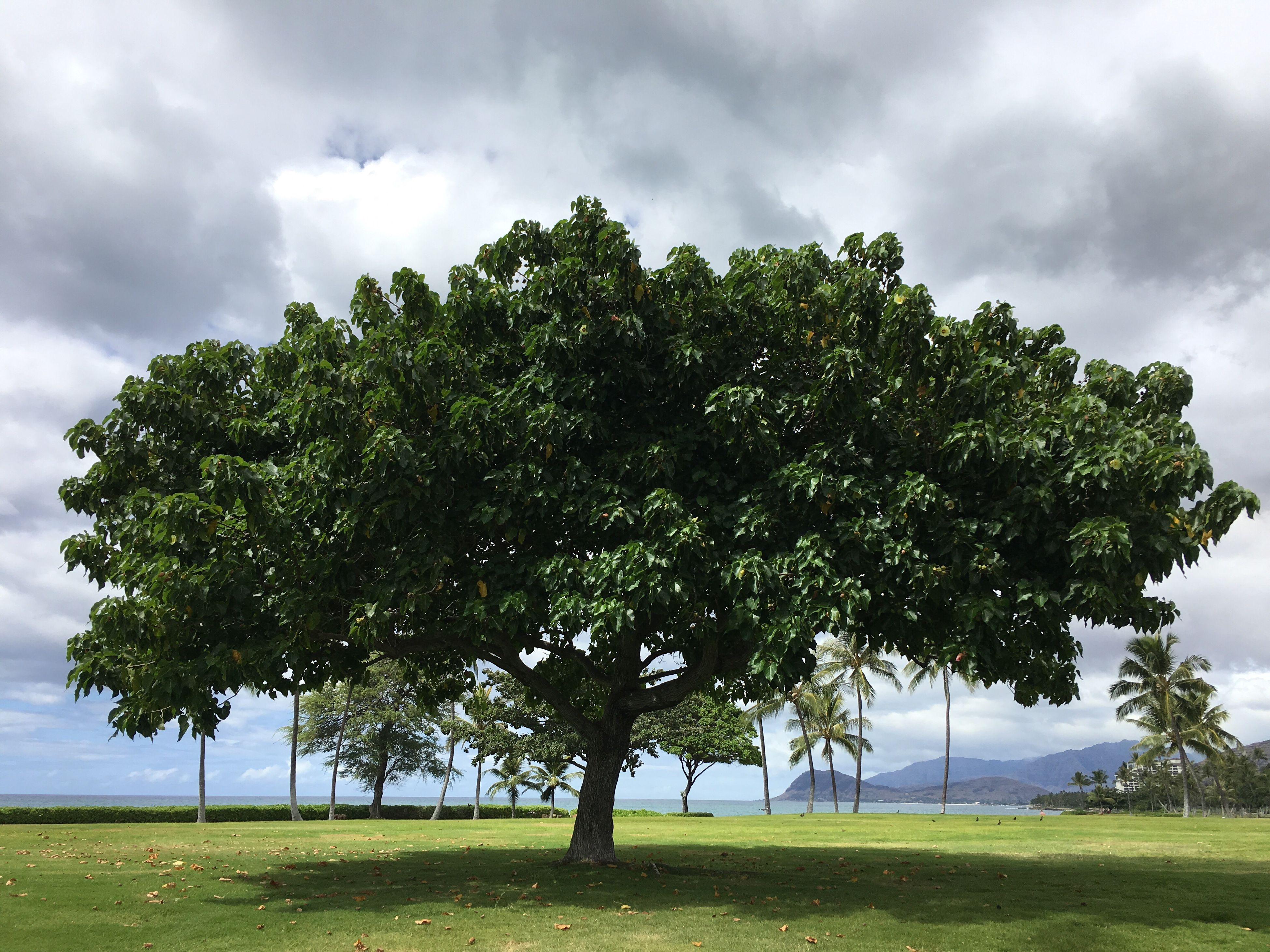 tree, nature, cloud - sky, growth, no people, outdoors, sky, day, beauty in nature, freshness