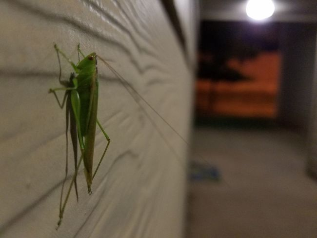Oklahoma City Nostalgia Cricket Grasshopper Friend Welcome Lil Ole Me Lil Ol Me Hello Just Hanging Out