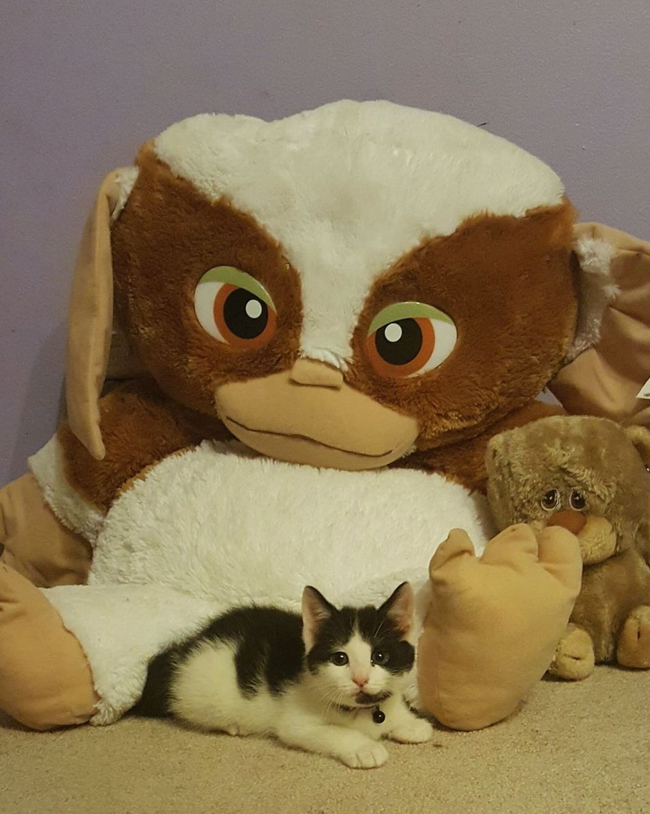 Hidden Kitty Domestic Cat Close-up Stuffed Toy Pets Looking At Camera No People Which One Is Real Animal Themes Forever Friends Blends In Sneaky Kitty Childhood Toys Stuffed Friends