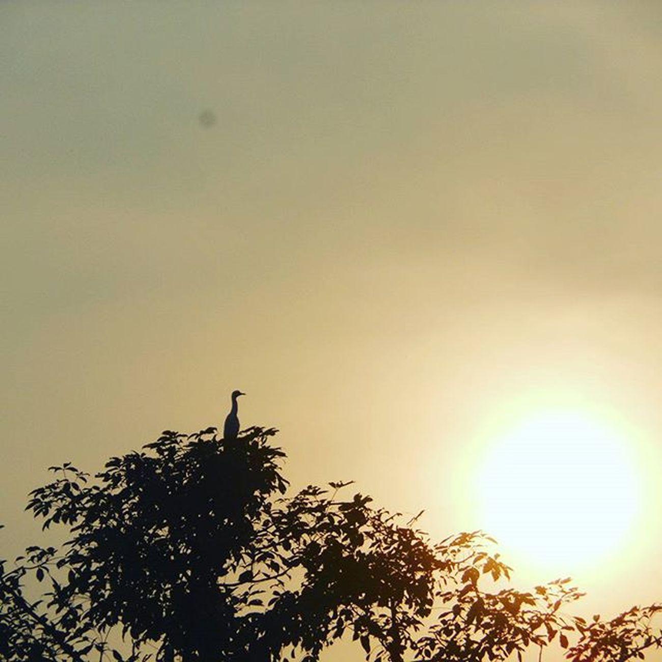 Just love this pic Cattleegret Ontopbranch Kharghar Birdwatching Nab Birds Sun Sillhouette Instadaily Instagood