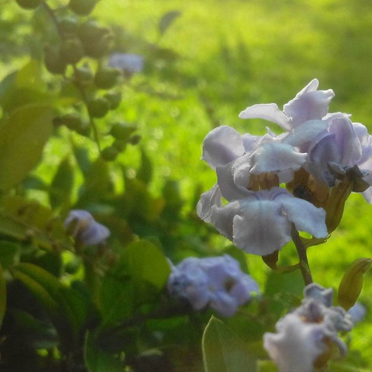 Amazing Amazingflower Flower Desenfoque Sumer Sumerday Crazy Beatiful Espectacular Loco Flor
