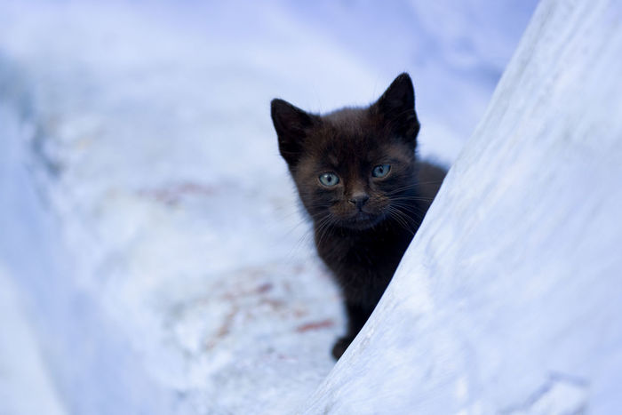 Hide And Seek Animal Themes Art Is Everywhere Beautiful Black Cat Blue Eyed Cat Blue Eyes Blue Wall Curious Cute Domestic Animals Domestic Cat EyeEm Animal Lover EyeEm Best Shots Feline Kitten Kitty Looking At Camera No People One Animal Outdoors Pet Pets The Secret Spaces Whisker