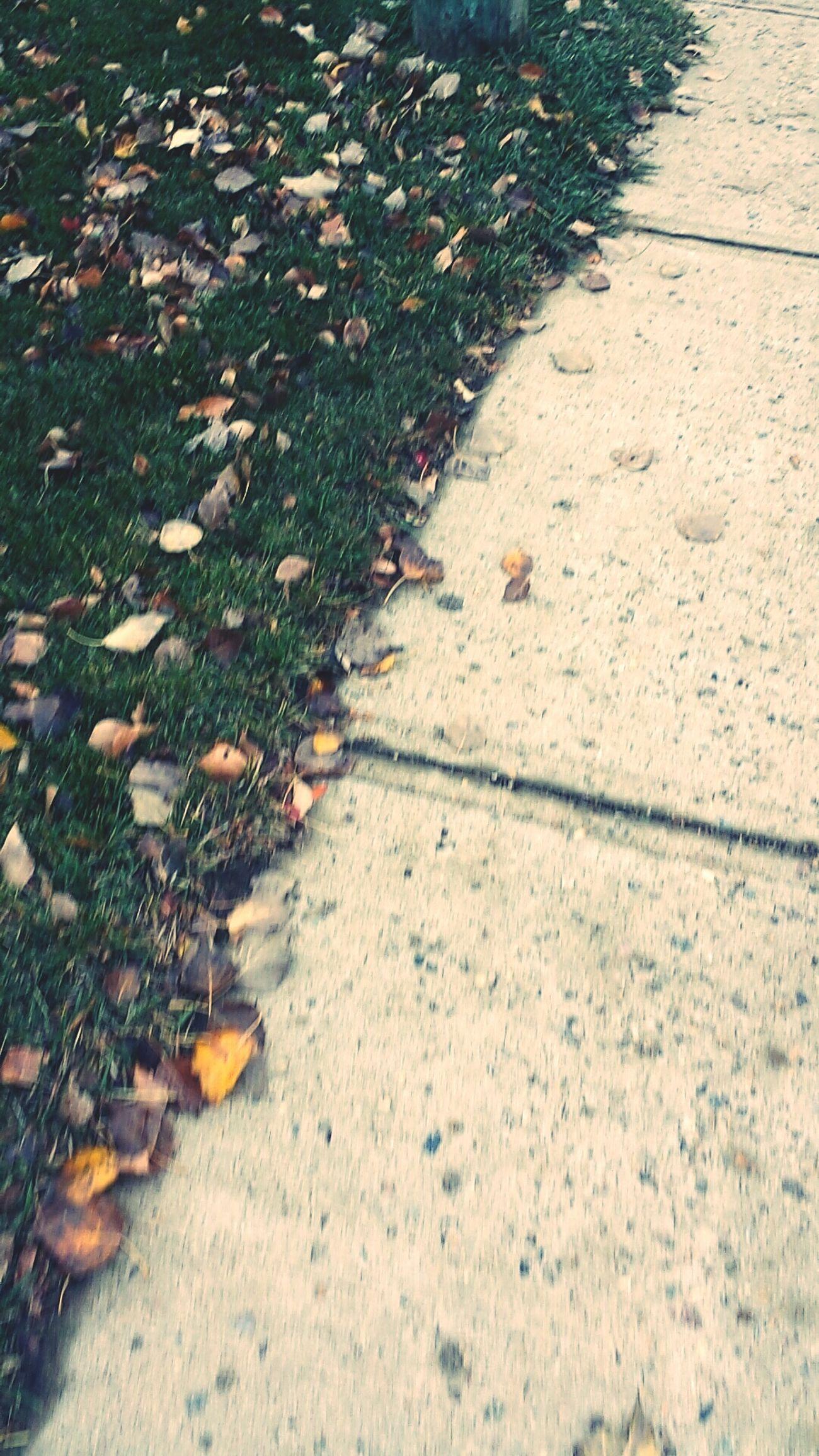 Fall Walks Fall Autumn Autumn Leaves