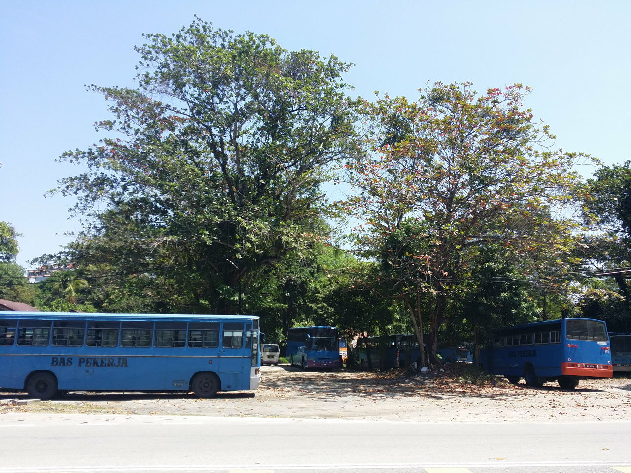 Tree Transportation Mode Of Transport Growth No People Outdoors Day Military Sky Factory Bus Bus