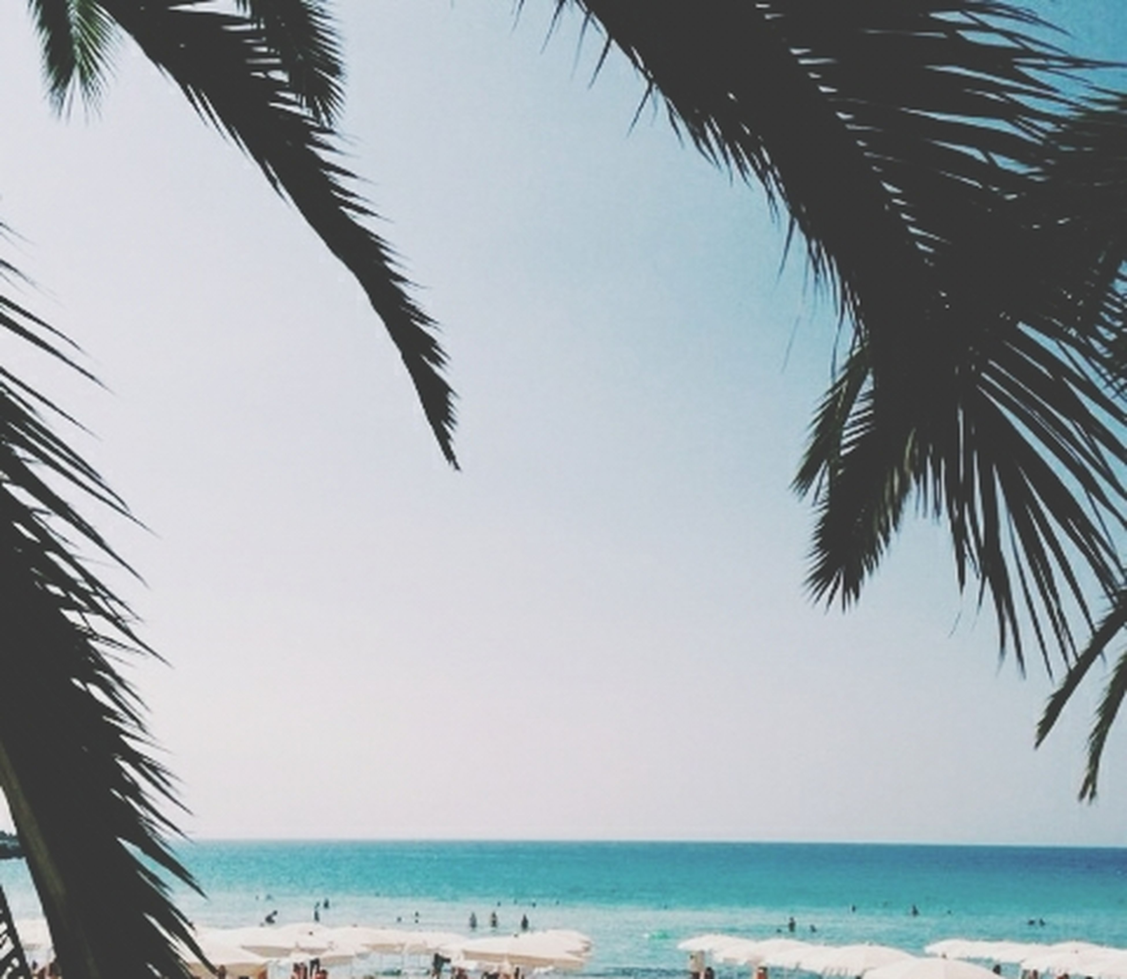 sea, palm tree, beach, horizon over water, water, shore, tranquility, tree, tranquil scene, scenics, beauty in nature, sand, nature, sky, tropical climate, blue, clear sky, vacations, idyllic, coconut palm tree
