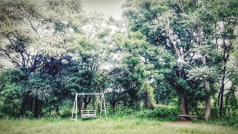Tree No People Nature Sky Green Color Day Grass Tranquility Growth Outdoors Park - Man Made Space Beauty In Nature
