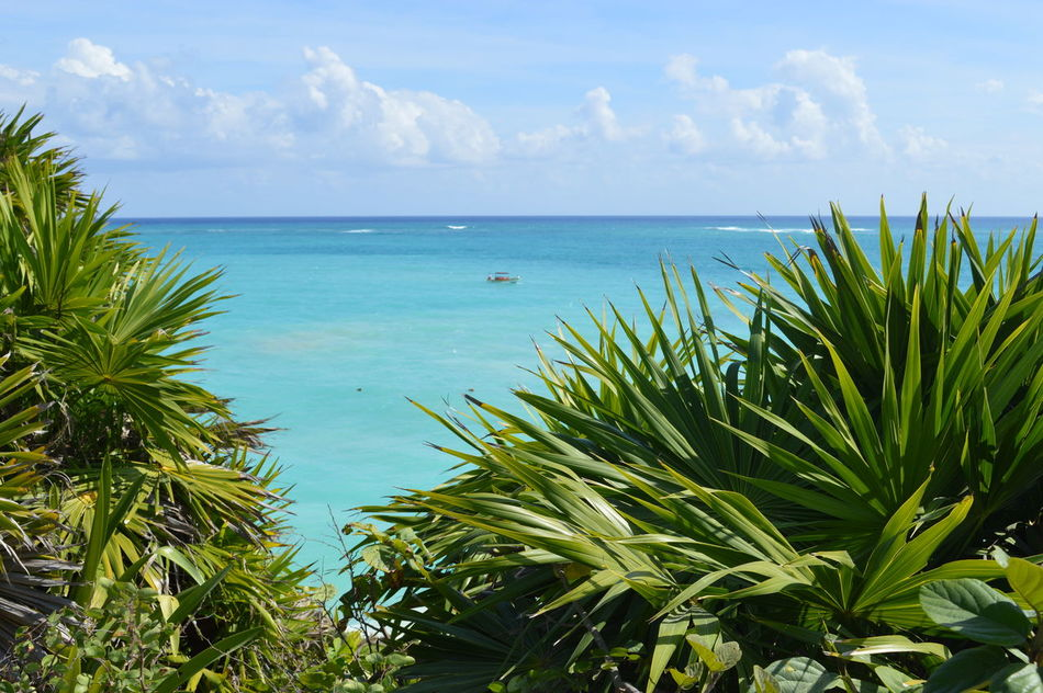 Beach Beauty In Nature Blue Day Green Color Growth Horizon Over Water Leaf Nature No People Outdoors Palm Tree Plant Scenics Sea Sky Tranquil Scene Tranquility Tree Tulum Tulum , Rivera Maya. Tulum Beach Tulum Mexico Tulum, Mexico Water