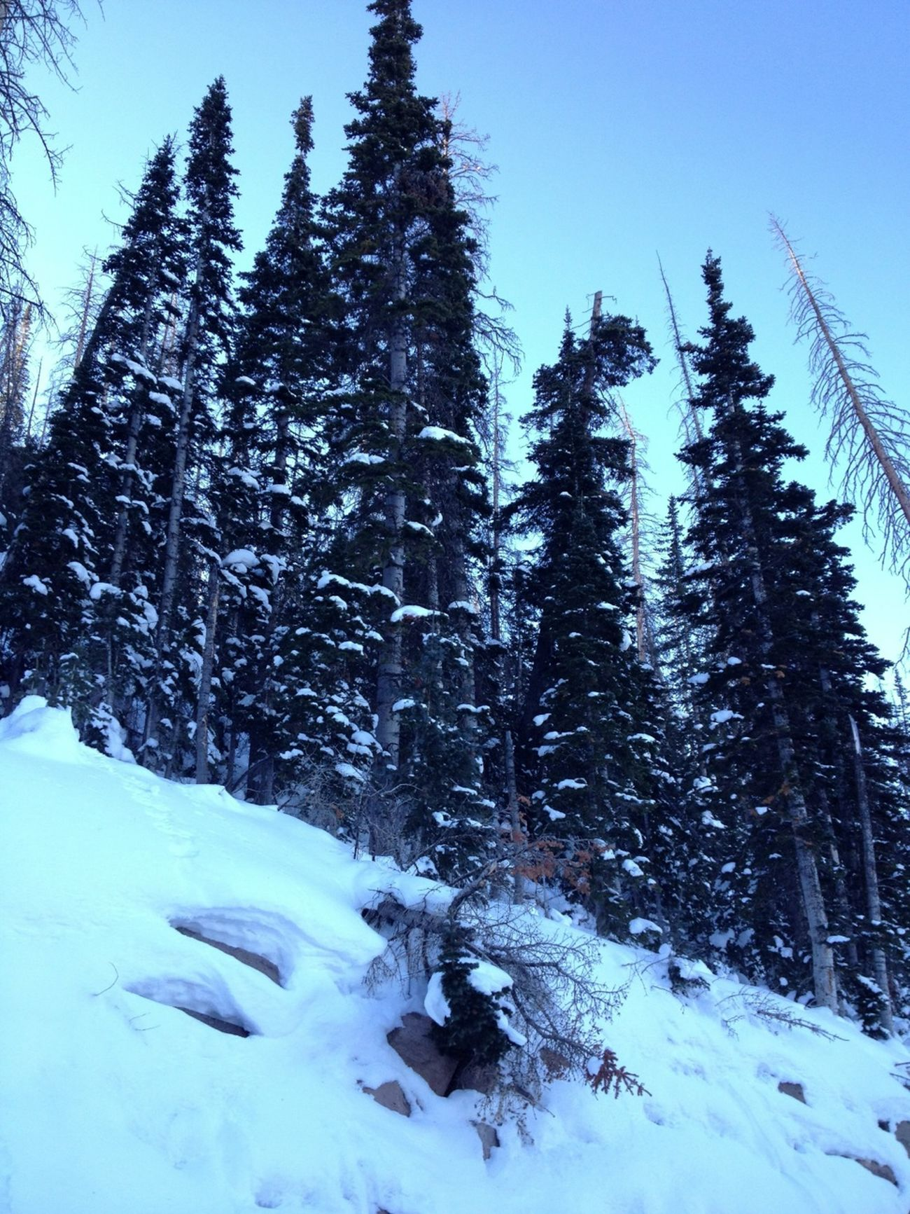 On The Way To Ski