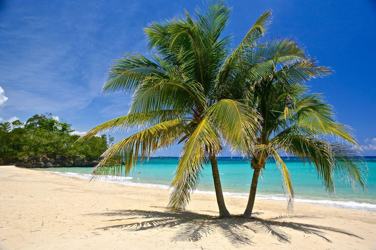 beach palms - Jamaica Inn Beach Palm Tree Sand Sea Tourist Vacations Water