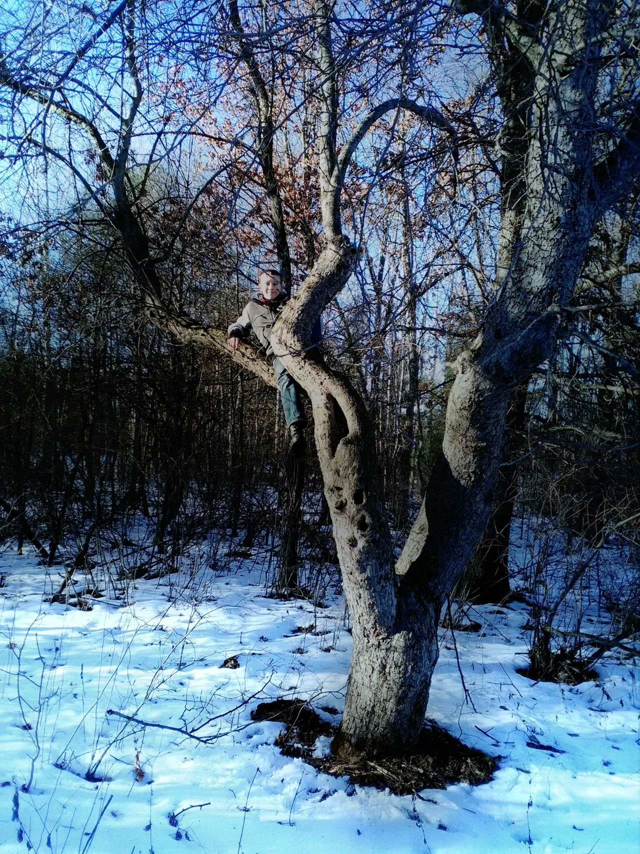 Tree Nature Winter Beauty In Nature Bare Tree Tranquility Outdoors Close-up Growth My Son ❤ Climbing Trees Having Fun :) Nature Photography My Photography. ❤ Check This Out 😊 My Point Of View Michigan Up North Hello World ✌ Real Photography Cold Outside ❄⛄  Real People, Real Lives Michigan Outdoors 2017 New Year My Love My Favorite Place