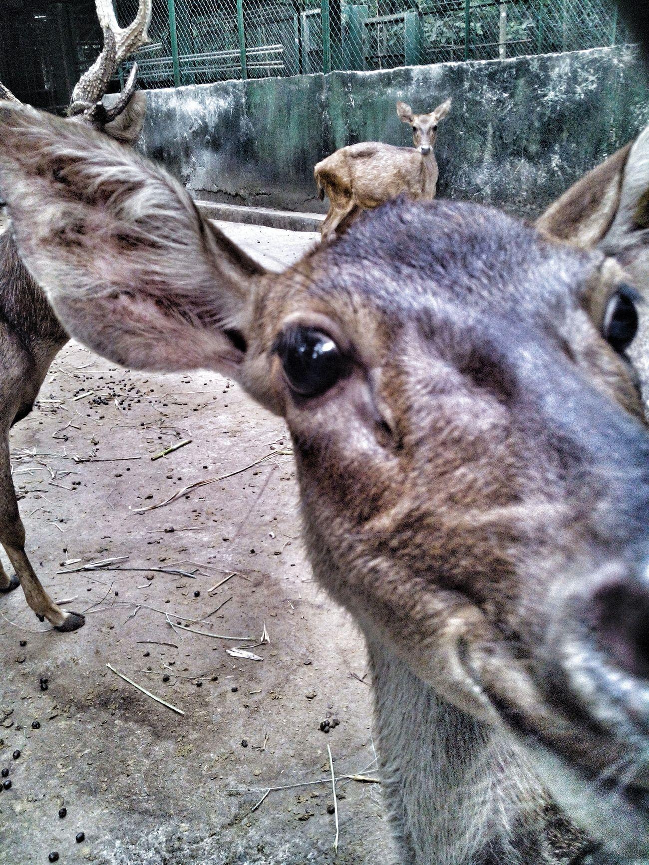 Selfie Portrait Deer ♥♥ Selfietime Selfieoftheday Selfie ✌ FUNNY ANIMALS Funny Deer Deerselfie