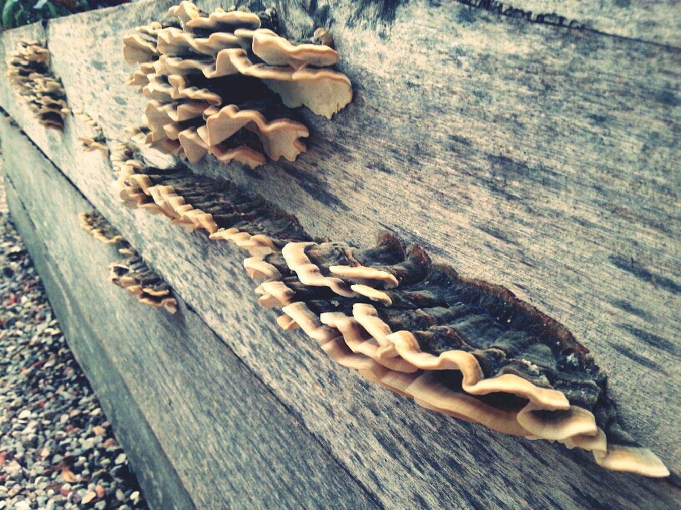Nature Garden Mushrooms Rustic