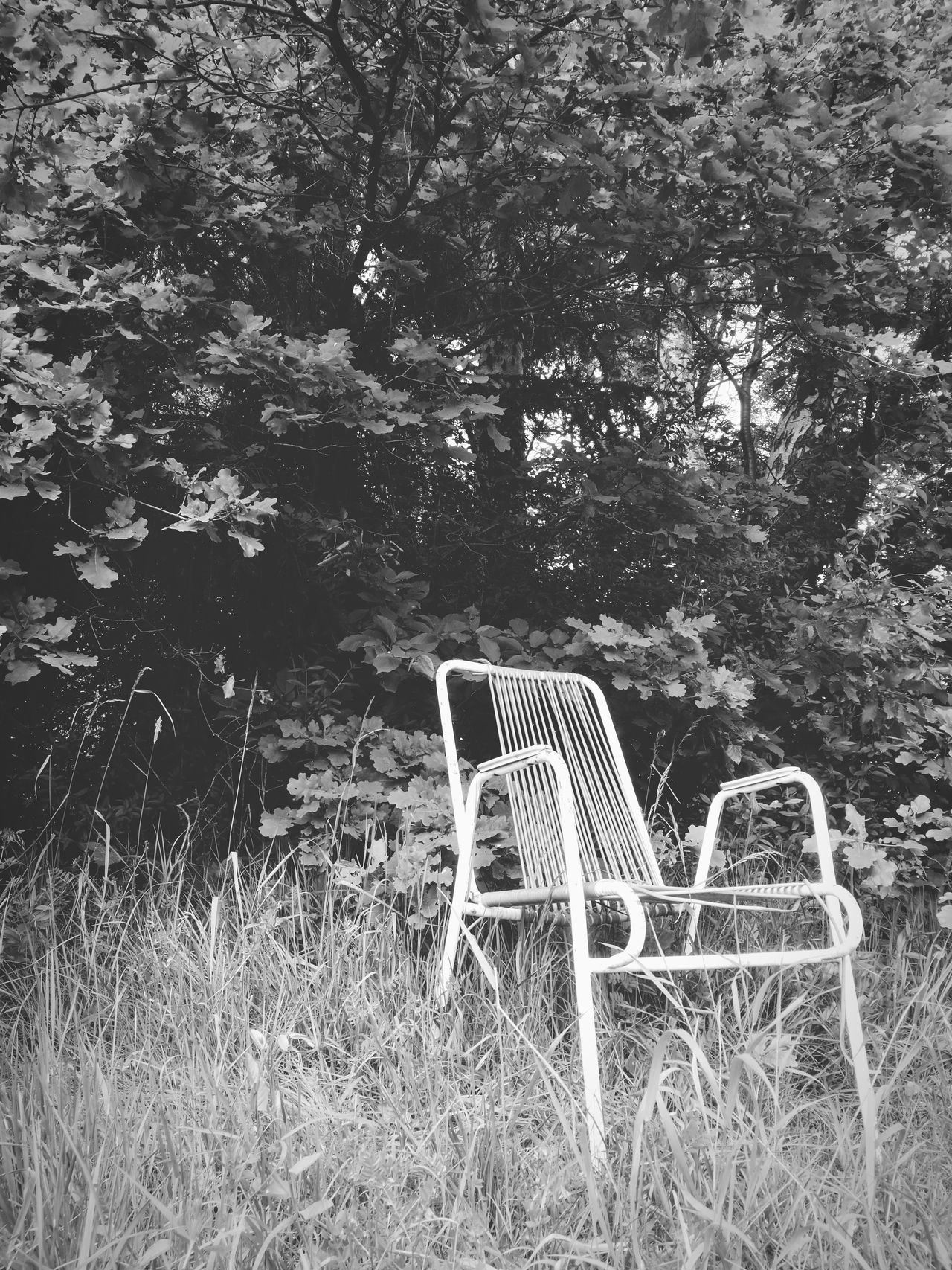 Tree No People Day Plant Nature Growth Outdoors Grass Chair Sitting Outside Tranquility Blackandwhite Blackandwhite Photography Lost Places Live For The Story The Street Photographer - 2017 EyeEm Awards EyeEmNewHere