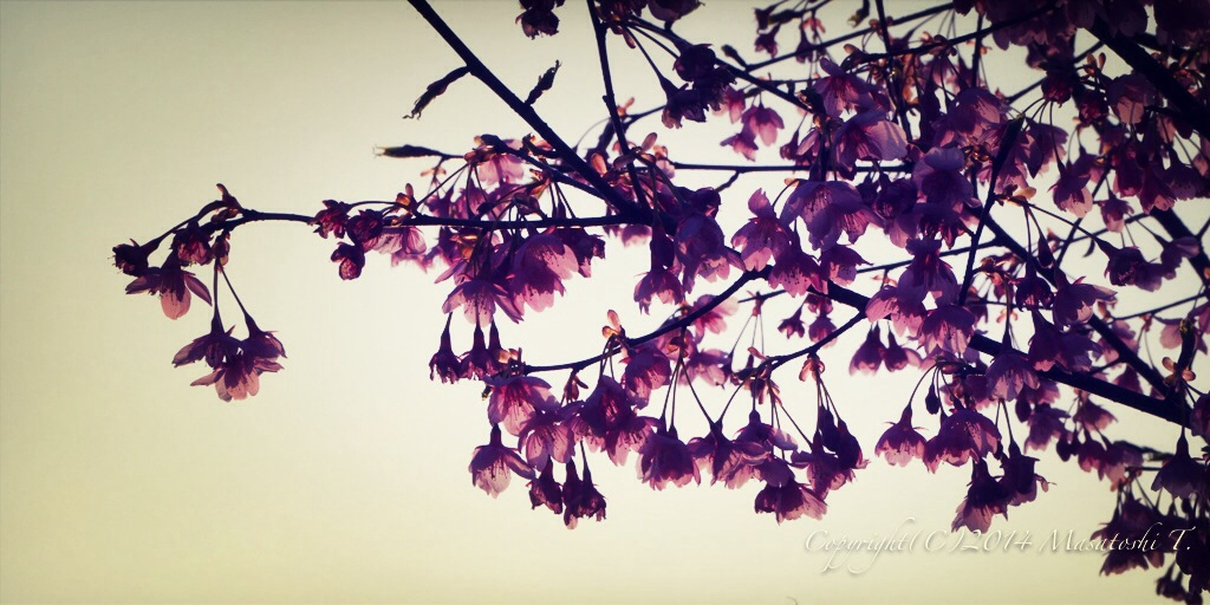 low angle view, branch, leaf, clear sky, growth, flower, nature, freshness, tree, beauty in nature, red, fragility, hanging, close-up, twig, no people, sky, day, outdoors, decoration