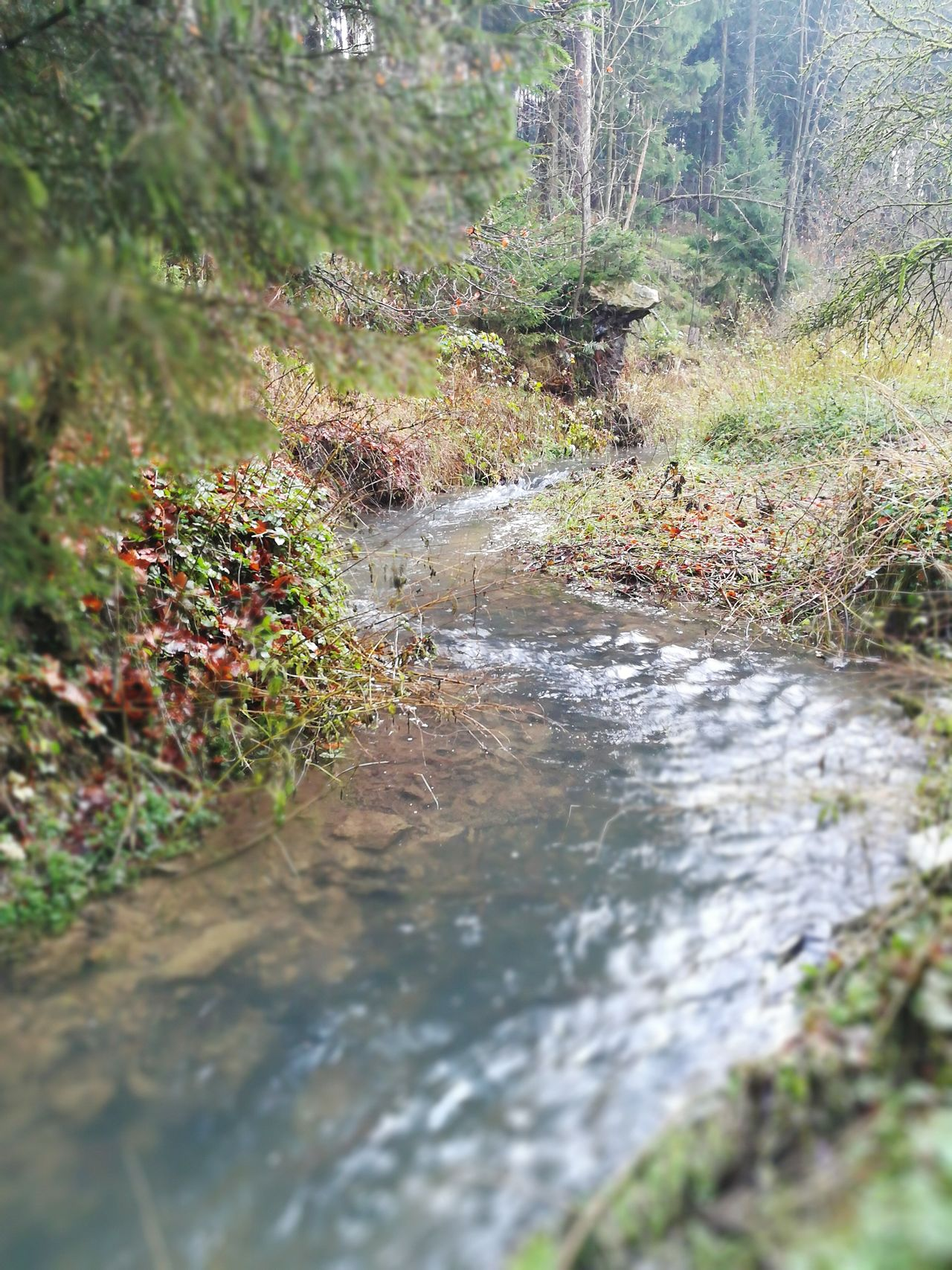 Silverriver Silberbach Silberbachtal Herbststimmung Veldrom Feldrom Horn-Bad Meinberg Nature Water No People Outdoors Day Beauty In Nature Tree Fishing Eggeturm Teutoburger Wald Teutoburg Forest