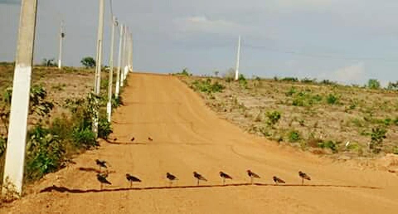 Calordemais Muito Sol Nature Photography Natureza EyeEm Birds Calor!!!