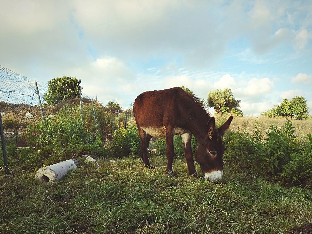 Beautiful stock photos of donkey, Animal Themes, Cloud - Sky, Day, Domestic Animals