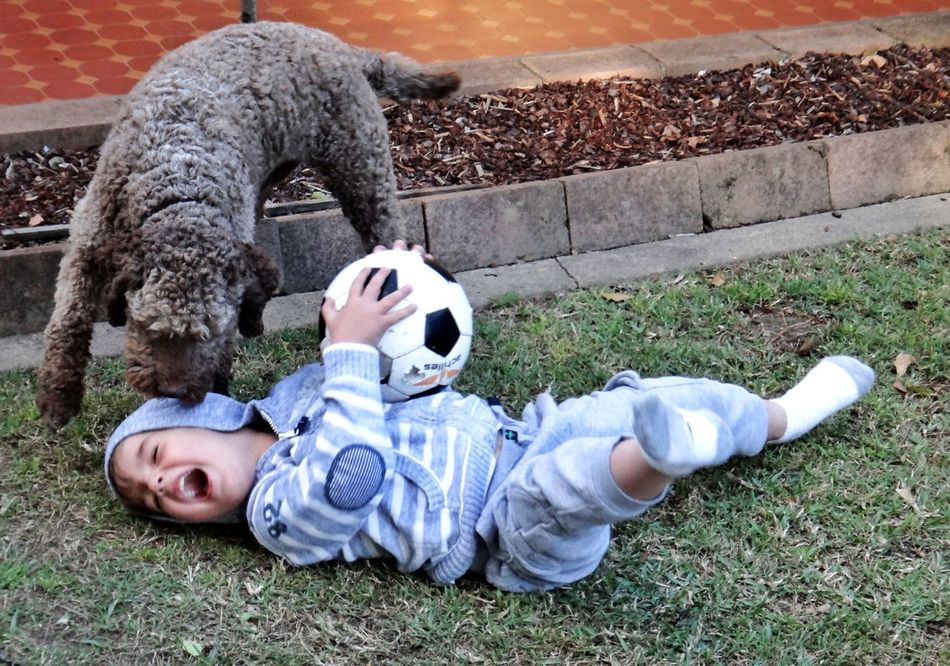 Boy Child Playing with his Pet Dog and a Soccerball Ball Natural Light Portrait Lagotto Romagnolo Pets Dogs Kid Family Kids Youth Childhood Children Portrait Canine Friendship Friends The Portraitist - 2016 EyeEm Awards Boys Children Playing LaGottoRomagnolo