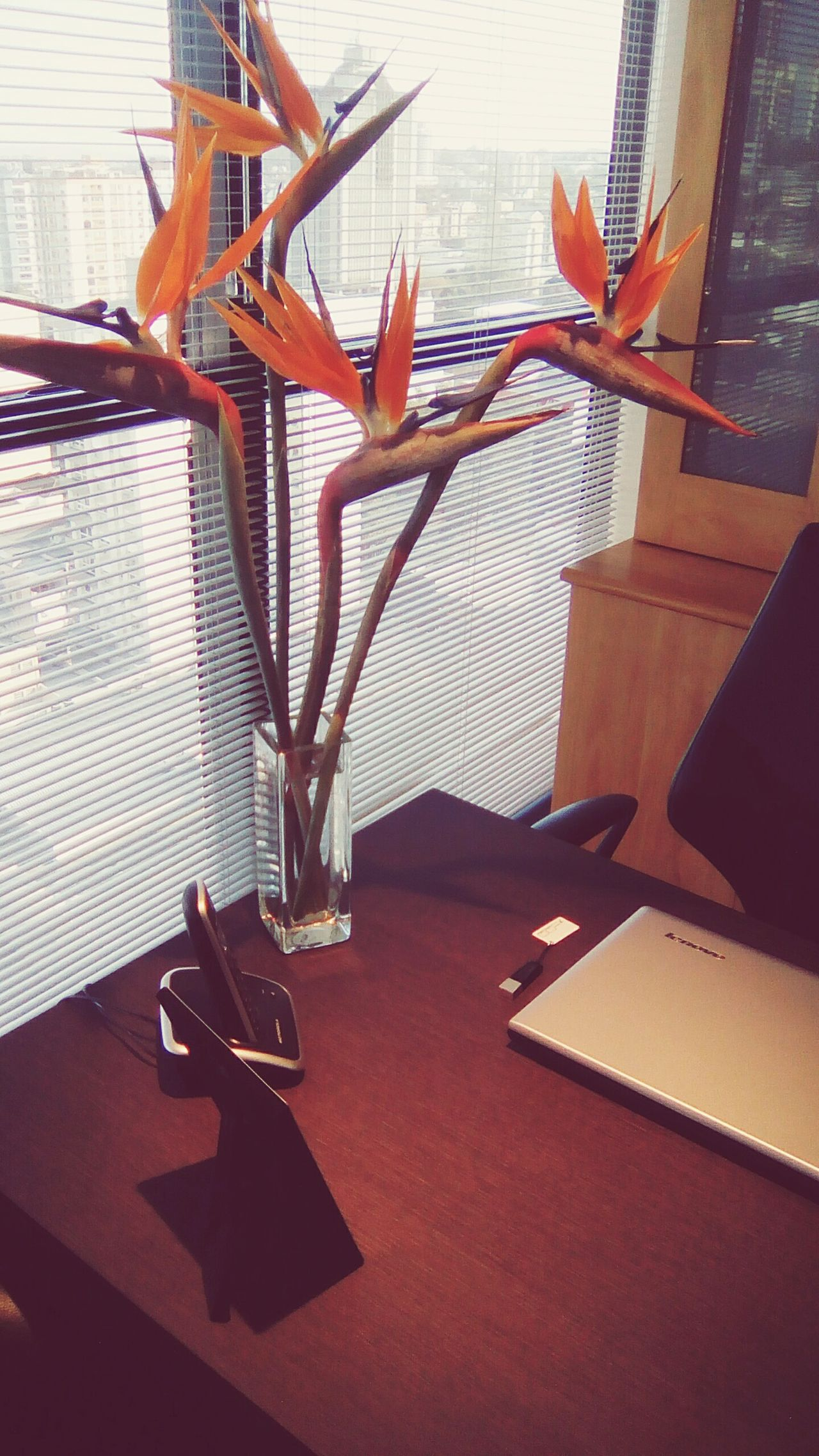 Flower Home Interior Window Escritório Escrivaninha Day No People Interior Designer  Working Day Glass - Material Sala Acerphotography Acer Accersories Accessory Janelas Persianas Vidro Notebook Laptop. Telefon Teléfono Telefone Trabalho Daysun