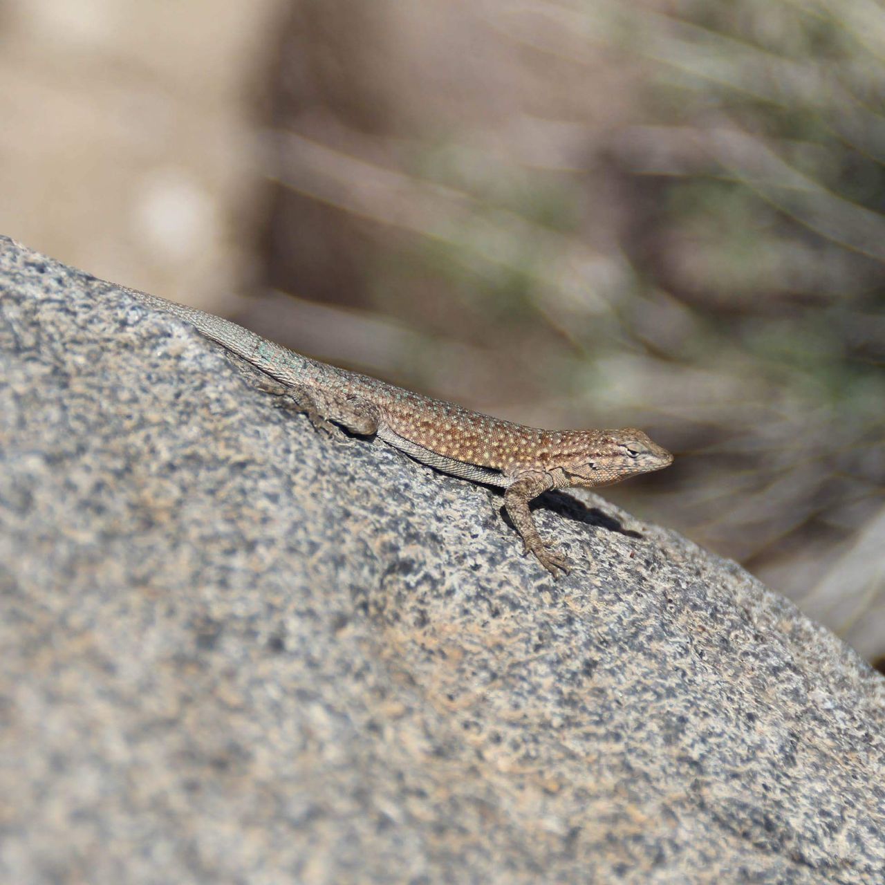 one animal, animals in the wild, animal themes, day, outdoors, reptile, animal wildlife, selective focus, nature, no people, close-up, full length