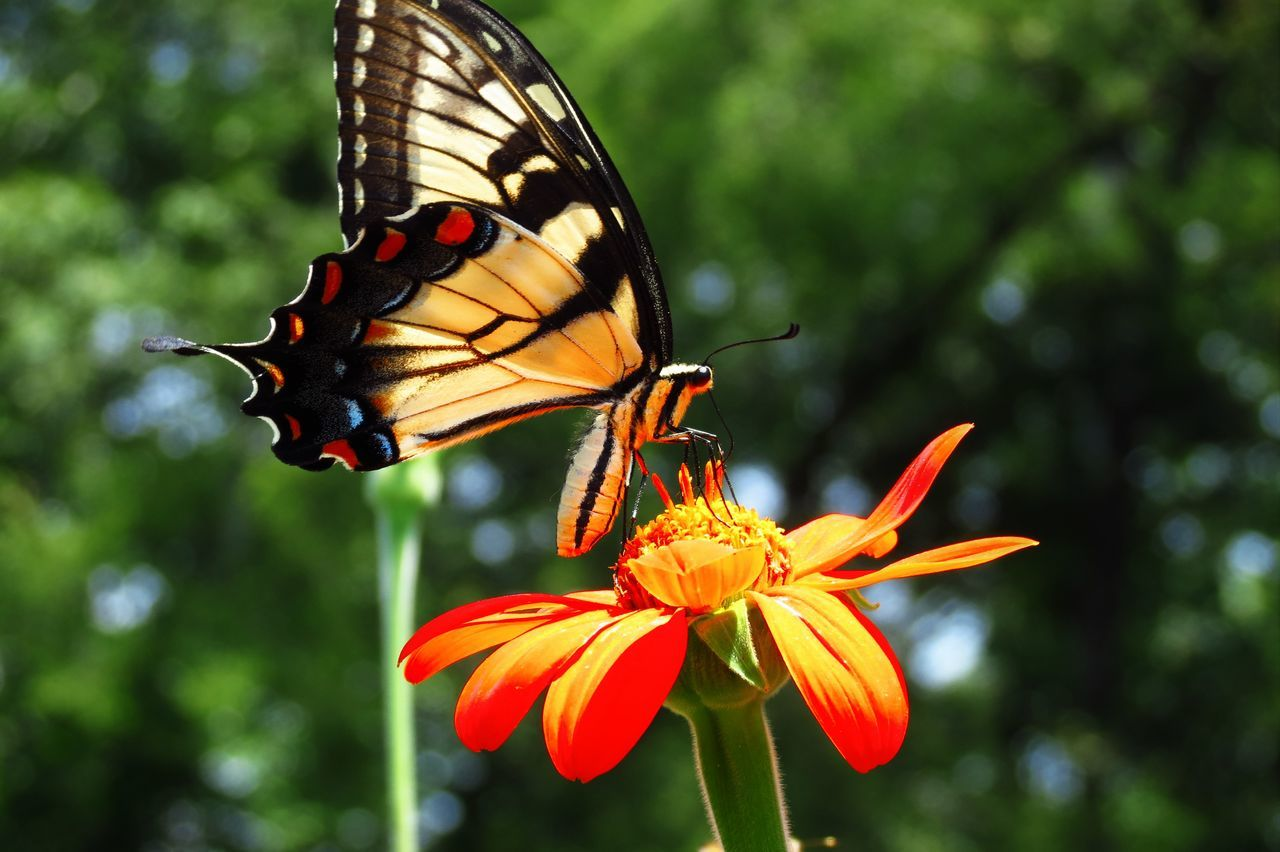 Beautiful stock photos of butterfly, Majestic, aethereal, animal Markings, animal Themes