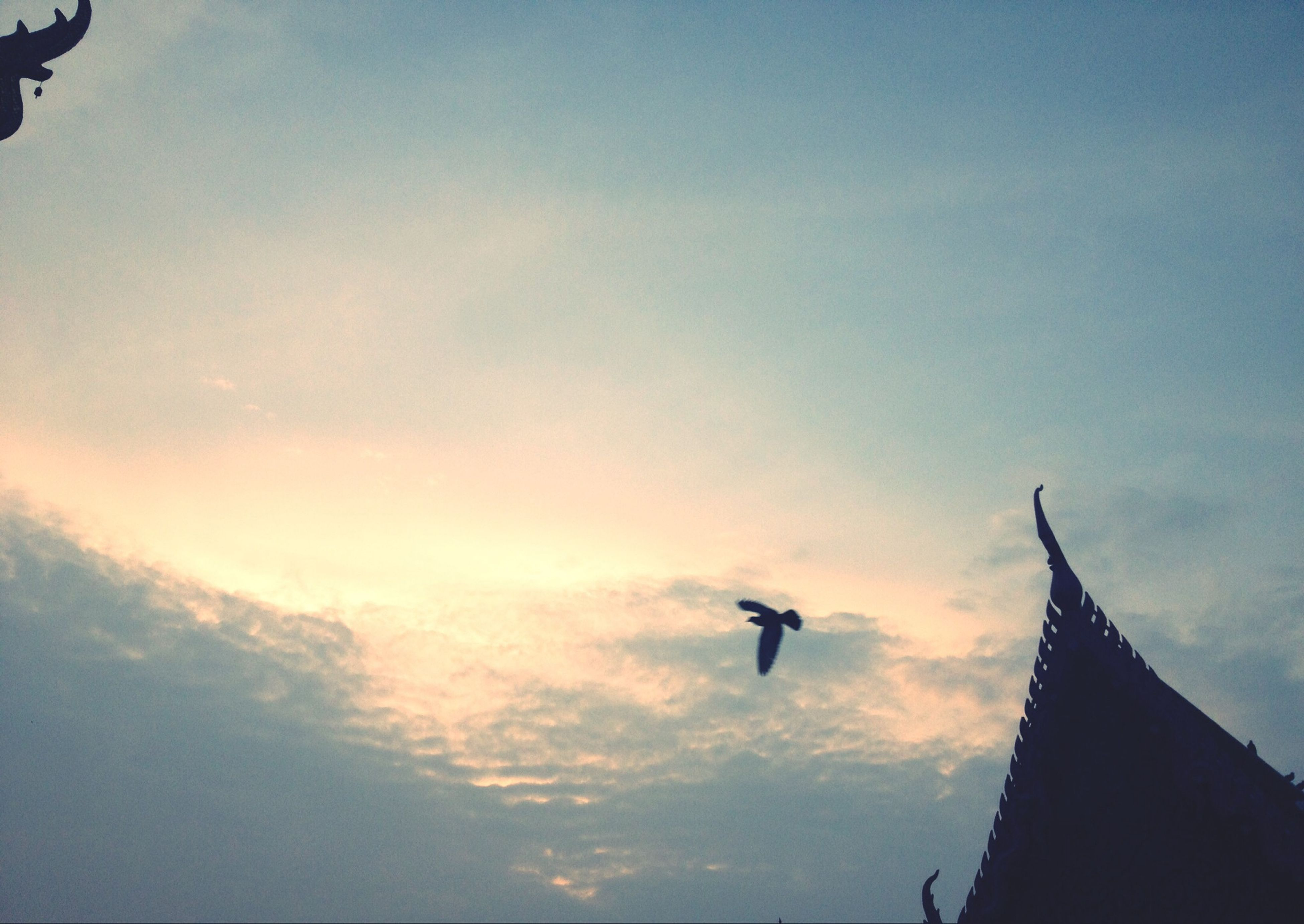low angle view, bird, flying, animal themes, sky, architecture, animals in the wild, building exterior, built structure, wildlife, one animal, mid-air, silhouette, cloud - sky, spread wings, cloud, outdoors, no people, day, city