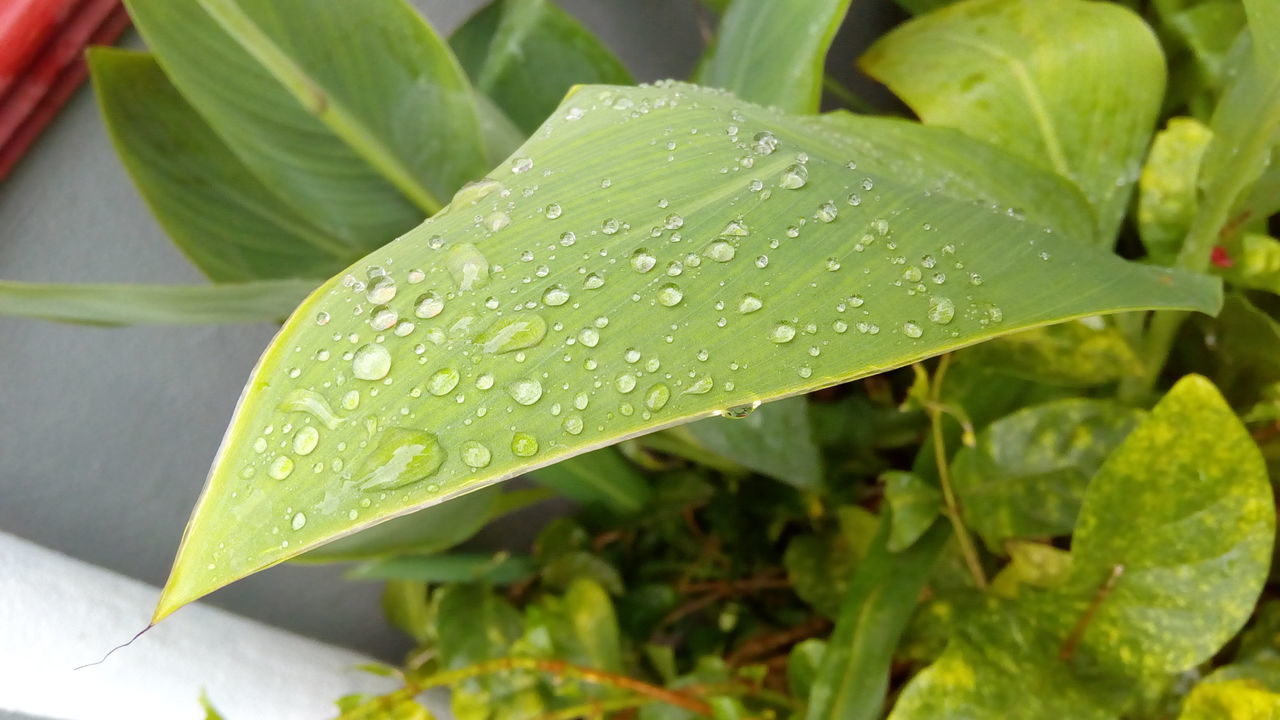 Drop Leaf Water Close-up Wet Growth Season  Freshness Plant Dew Nature Fragility Selective Focus Green Color Beauty In Nature Day Purity Leaves Focus On Foreground Outdoors Rain Drops Rain Drops On Leaves