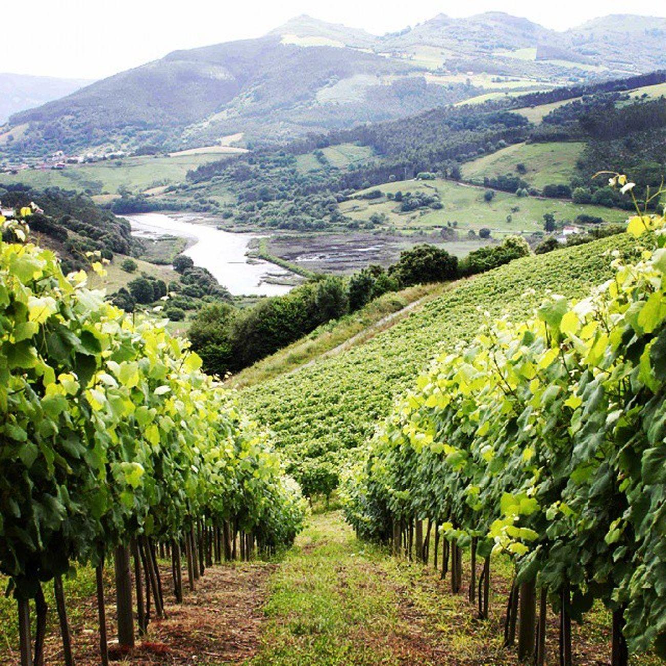 Sabias que en Cantabria también elaboran Vino Albariño ? Hoy Bodegas Nates se estrena en el Wineuptour edición especial Premium y Espumosos