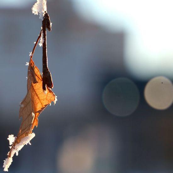 Poetry of frosty evening (-30 C) Snow Winter Bokeh Bokeh Lights Bokehlicious Bokeh Photography Macro Macro_collection Macroclique Beautiful
