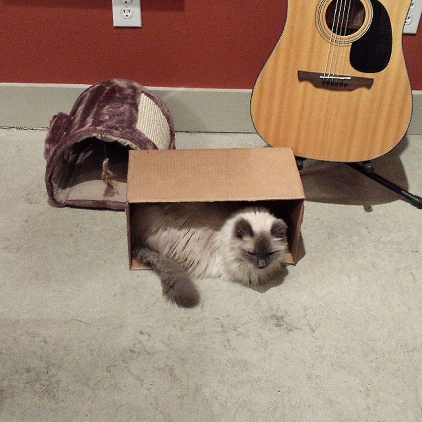 Lazy Falcor ,s New Box
