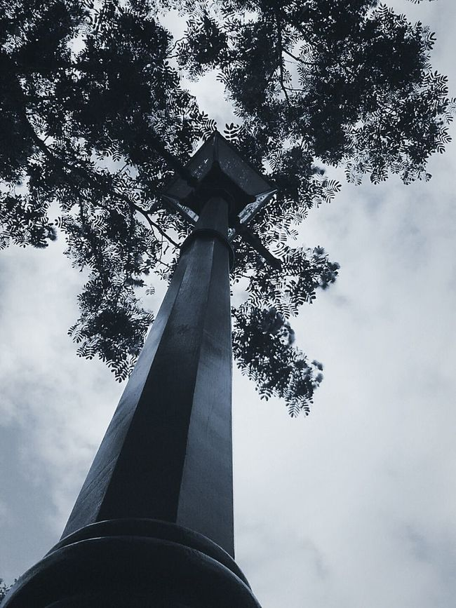 Low Angle View Tree Sky Tall - High Cloud - Sky Tall Outdoors Branch Tranquil Scene Cloud Day Scenics Growth Tranquility Nature EyeEm Clear Sky EyeEm Best Shots Beauty In Nature Low Angle View Tree Sky Tall - High Cloud - Sky Tall