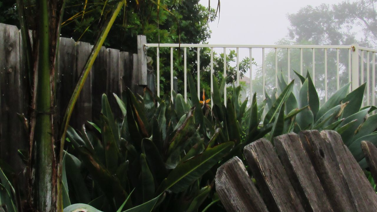 Growth Plant Nature No People Green Color Growing Day Beauty In Nature Outdoors Tranquility Close-up Freshness Greenhouse Bench Foggy Morning San Diego Birds Of Paradise