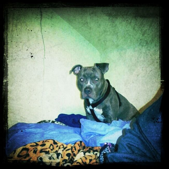 Pup Sittin Nd Chillin