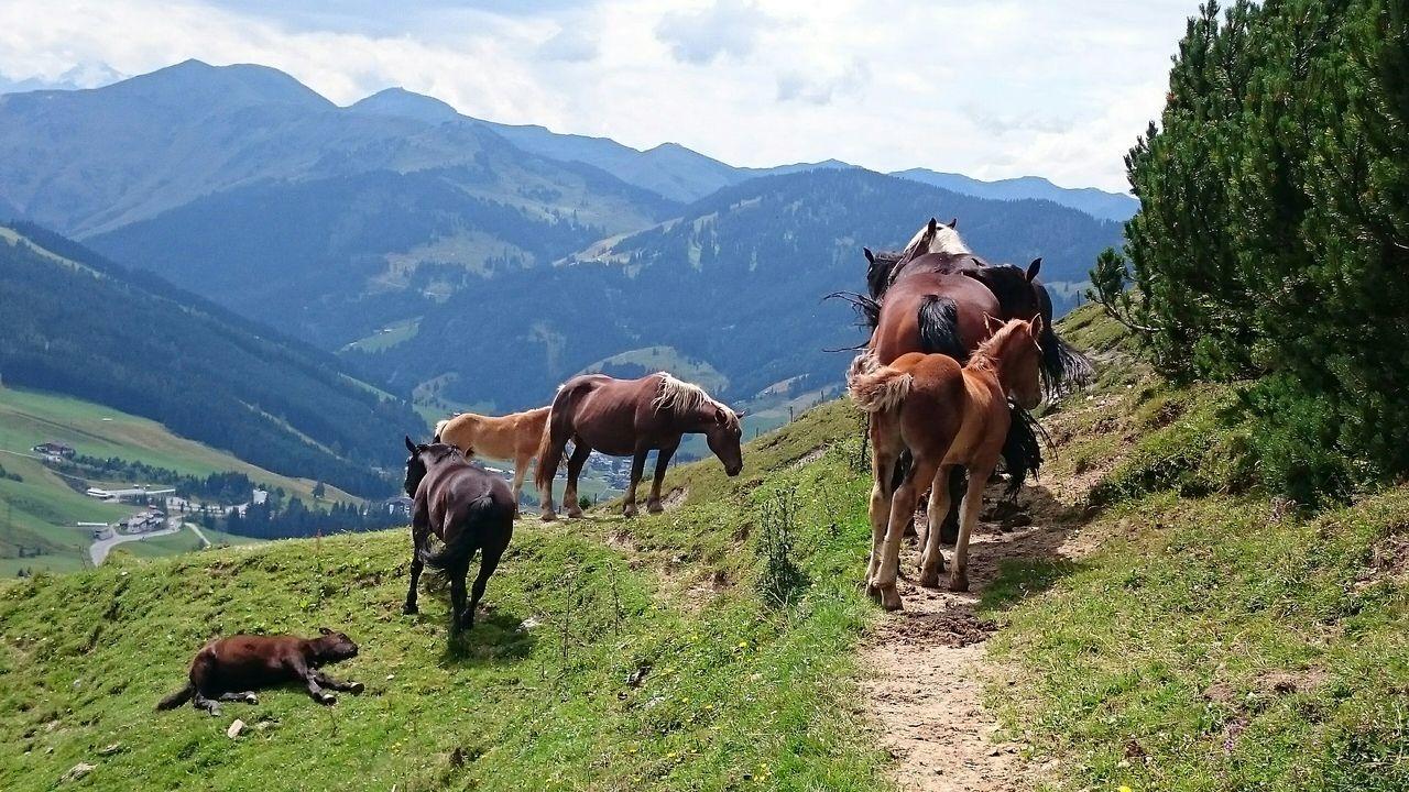 Yhm can I pass? No Way Through Horses Mountains Austria Mountains