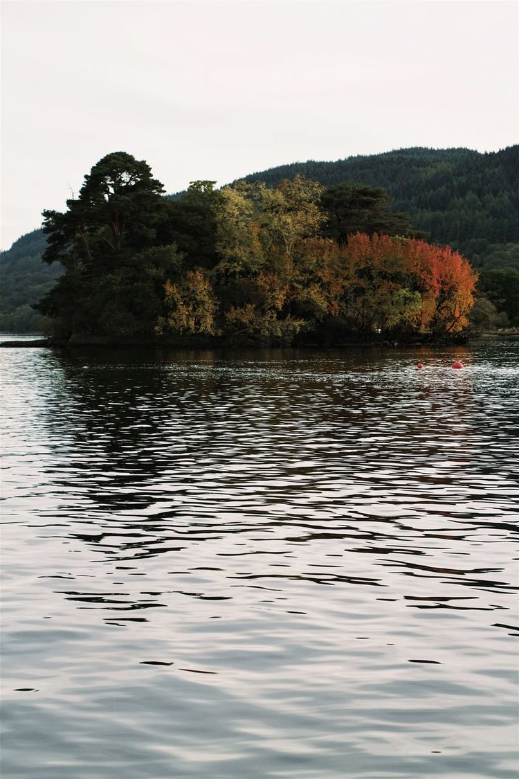 Inveruglas, Loch Lomond. Island Trees Loch  LochLomond Autumn Colors Autumn Crannog Water Lake Scotland Vertical TreePorn