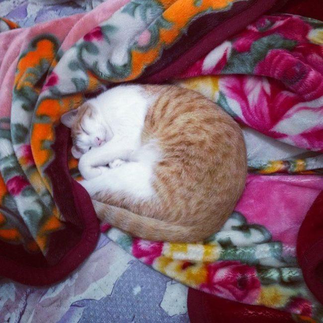 太放肆了這隻貓. 小黃 霸床