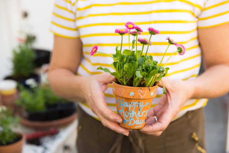 Beautiful stock photos of family, Close-Up, Flower Pot, Fragility, Front View