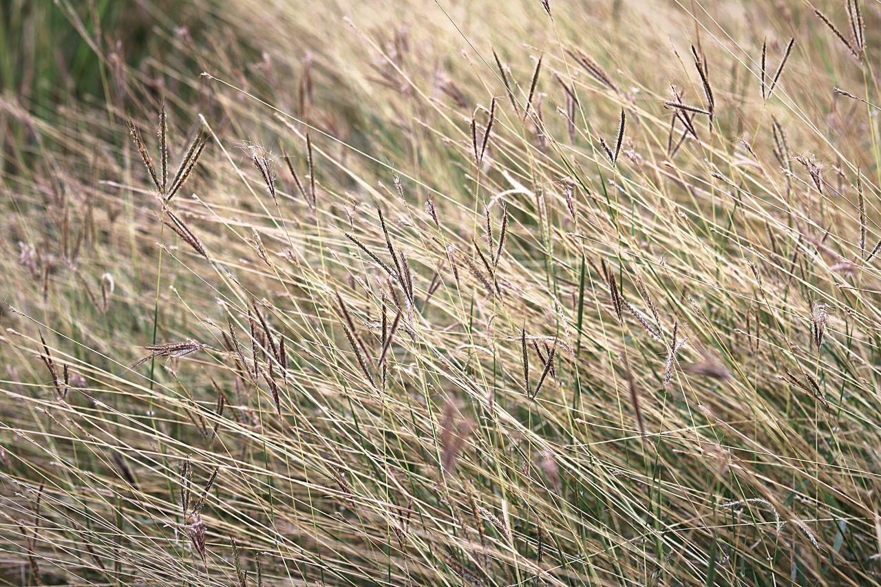 Grassfield Grass Softness Backgrounds Soft
